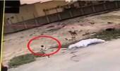 بالفيديو.. كلاب ضالة تهاجم طفلا وتصيبه بجروح بليغة بالأحساء