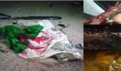 مصرع وإصابة 12 مشجعا جزائريا في انقلاب شاحنة