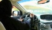 عدد المواطنات المتقدمات للعمل كمدربات لقيادة السيارات في الأحساء