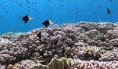 """بالصور.. """" نيوم """" تنفرد بالشعاب المرجانية الأهم في العالم"""