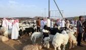 تراجع في أسعار الأضاحي بالمدينة المنورة ثالث أيام العيد
