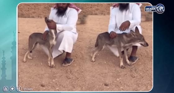 بالفيديو.. مواطن ينقذ ذئب بري بعد تعرضه لإصابة خطيرة