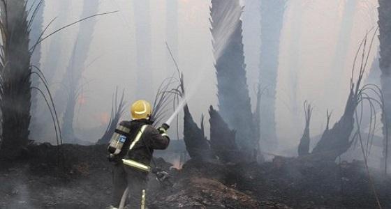 بالصور.. اندلاع حريق بـ4 مزارع بسكاكا