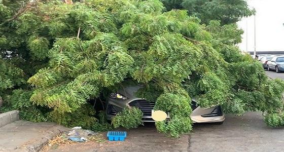سقوط شجرة كبيرة على سيارة مواطن بحي السامر