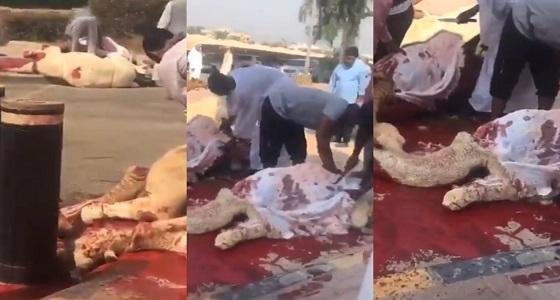 احتفالًا بأمير الكويت.. ذبح عدد كبير من الأبل أمام القصر (فيديو)