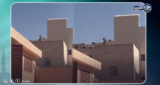 بالفيديو.. أسد أعلى سطح مبنى قرب مدرسة بالرياض
