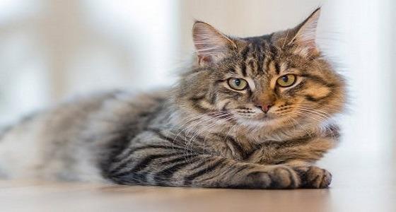 رجل يقتل قطة بوضعها في آلة تجفيف الملابس