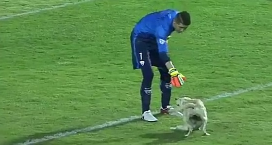 بالفيديو.. كلب يطارد اللاعبين أثناء مباراة لكرة القدم بعد اقتحام الملعب