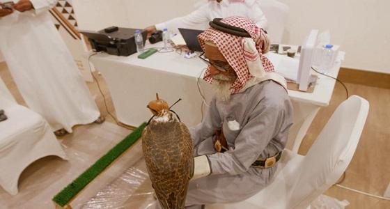بالفيديو.. مشاركةأكبر صقّار بالمملكة في مهرجان الملك عبدالعزيز