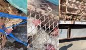 بالفيديو..شاحنة دجاج «أجرب» تسلك طريقًا مهجورًا بالطائف