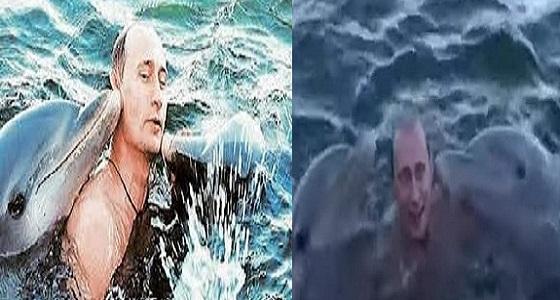 بالفيديو.. « بوتين» يسبح مع الدلافين أثناء زيارة رسمية لكوبا