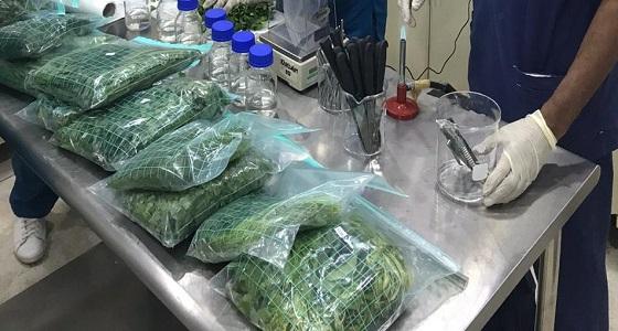 مختبر سلامة الغذاء والبيئة يجري 3460 إختبار للتأكد من صلاحية الأغذية بخميس مشيط