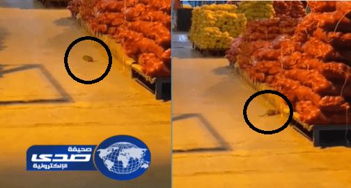 بالفيديو.. فأر يتجول بين أكياس البصل بسوق الخضار بجدة