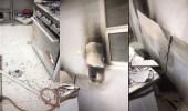 نشوب حريق بدار حماية في جازان ونجاة النزيلات