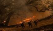 حرائق هائلة في غابات شمال إيران
