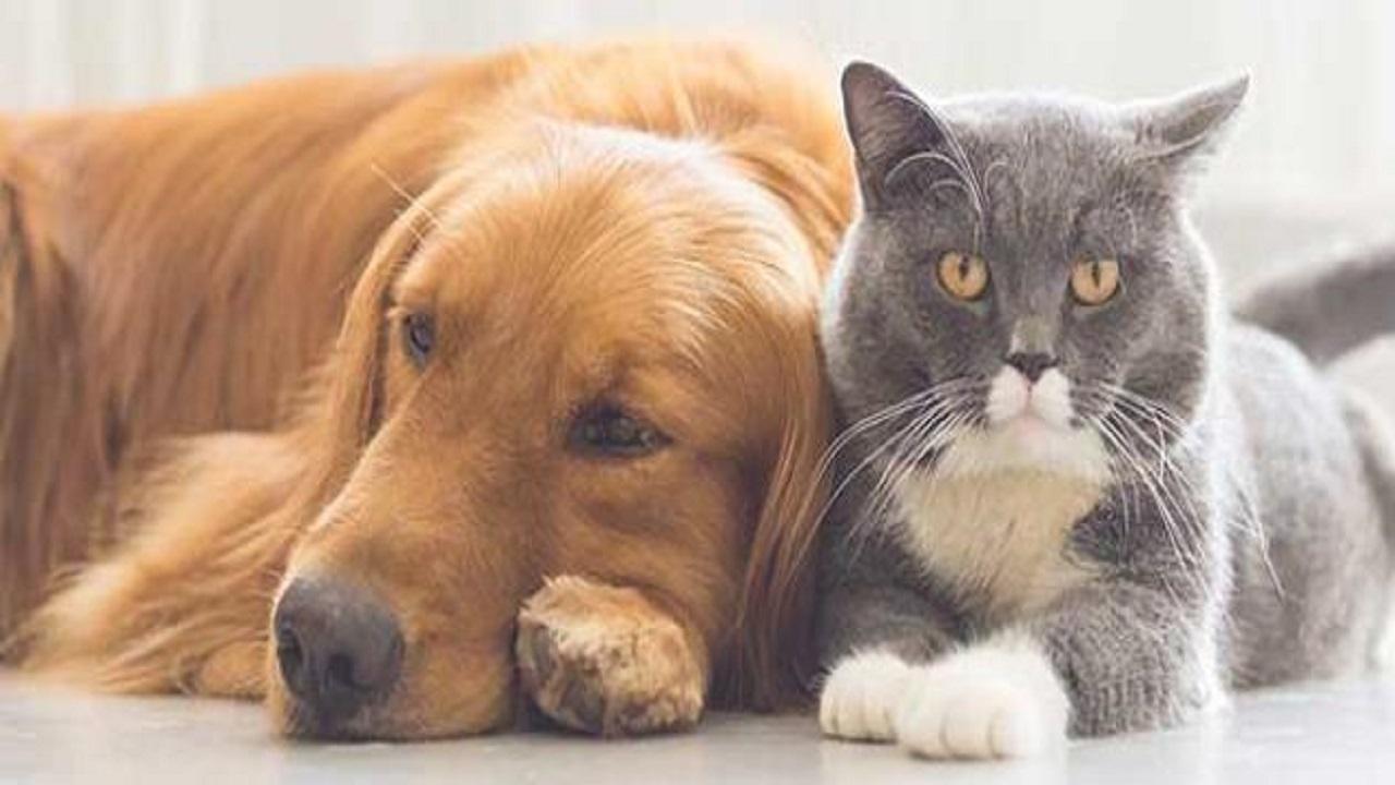 بالفيديو.. الحيوانات الأليفة لا تنقل كورونا