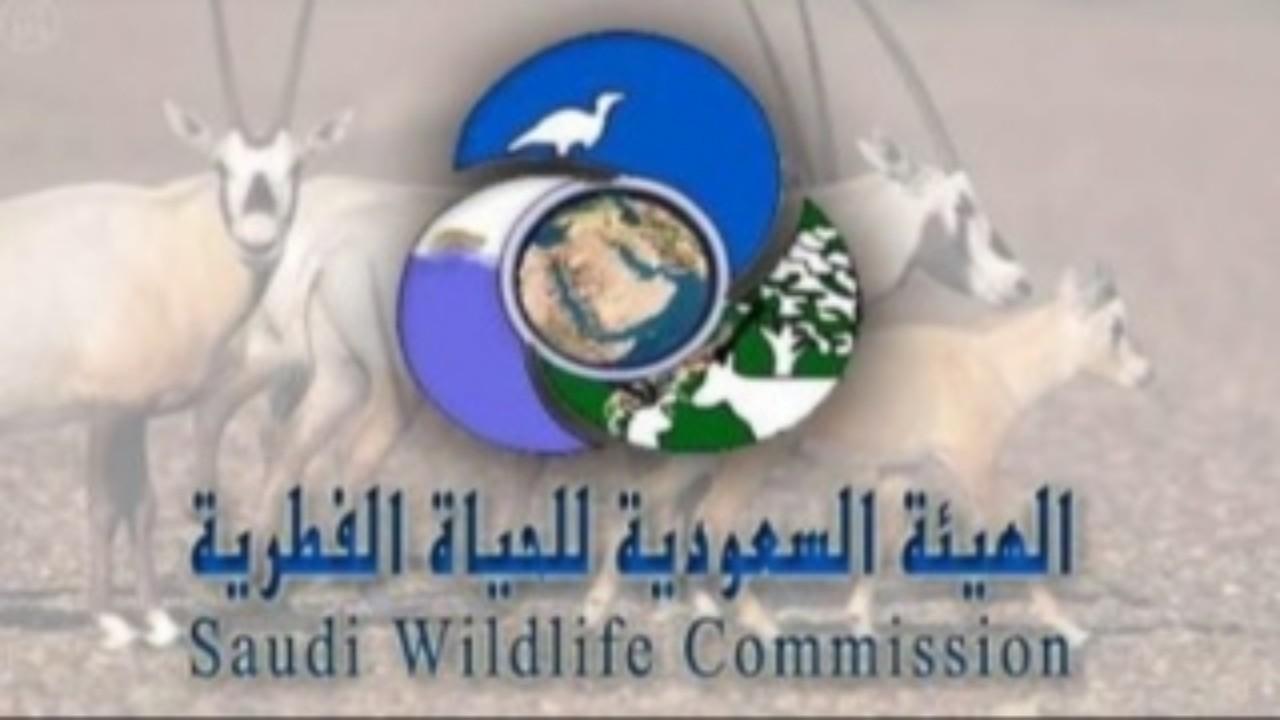 20 ألف ريال غرامة مخالفة نظام صيد الحيوانات والطيور البرية