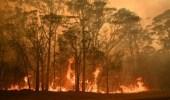 بالفيديو.. حريق غابات الصين ووفاة 18 رجل إطفاء