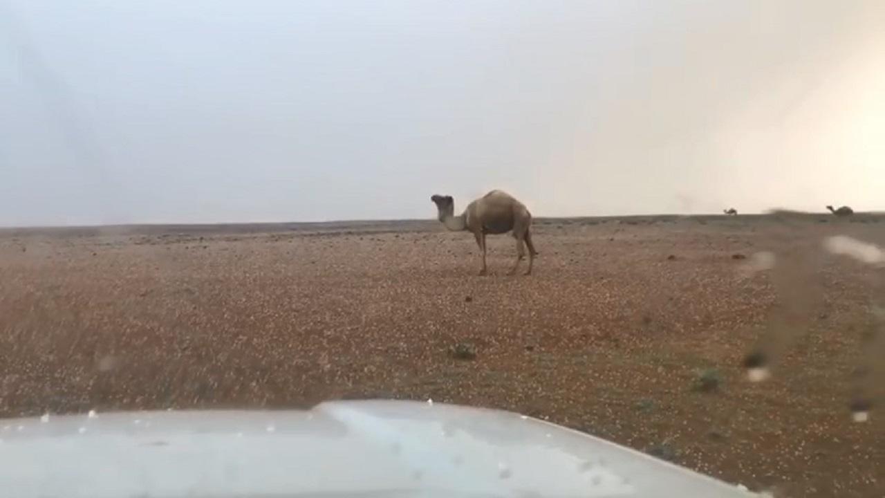 بالفيديو.. أمطار رعدية مصحوبة بزخات من البرد على طريف