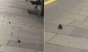 بالفيديو.. الفئران تمرح في شوارع لندن بعد فرض منع التجول