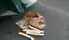 فيديو.. مواطن يدين إلقاء الناس للأغذية الصالحة في القمامة