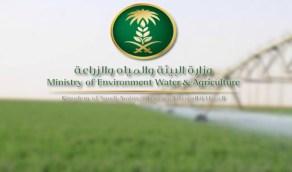 وزارة البيئة بالشرقية تصدر 446 تصريحا لمزارعي القطيف لعبور نقاط الحجر الصحي