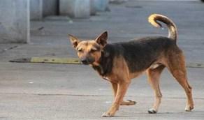 كلب ضال يقتل ويصيب 7 أطفال