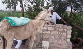 فيديو لشاب يغتصب حمارا في دولة عربية يثير موجة غضب