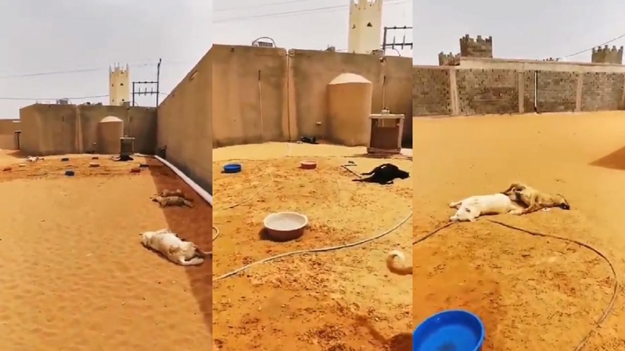بالفيديو.. ناشط ينهار بعد تسميم كلابه بالرياض