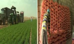 بالفيديو.. إنتاج الخضار يزيد عن السوق المحلي وتوريده بأسعار مخفضة لجميع المناطق