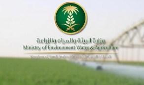 """""""البيئة"""" تصدر 2436 ترخيصا لأنشطة زراعية منذ بداية جائحة كورونا"""