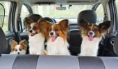 نصائح لحماية الحيوانات الأليفة أثناء اصطحابها في السيارة