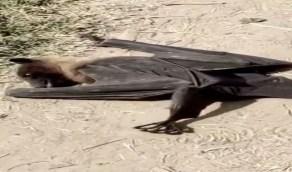 شاهد.. لحظة سقوط خفافيش ميتة من السماء