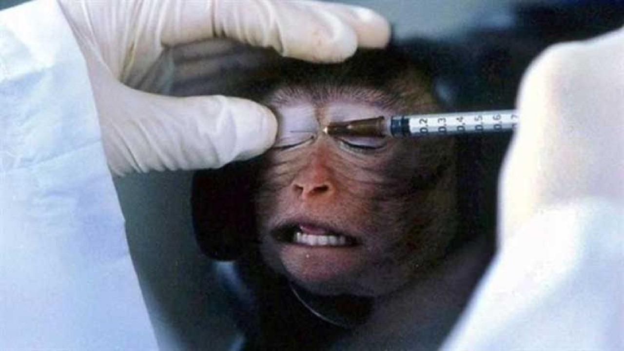 تايلاند تعلن بدء تجارب لقاح مضاد لكورونا على «القردة»