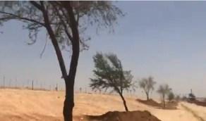 بالفيديو.. زراعة أشجار برية على طريق الملك سلمان بالرياض