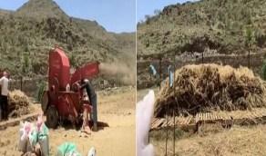 بالفيديو .. بدء موسم حصاد القمح في عسير