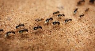 أسهل 10 طرق للتخلص من النمل في منزلك