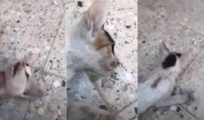 بالفيديو.. مواطنة تنقذ حياة قطة تعرضت للإختناق