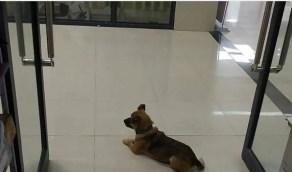 """بالصور.. رد فعل مؤثر لـ """"كلب"""" توفي صاحبه بكورونا منذ ثلاثة أشهر"""