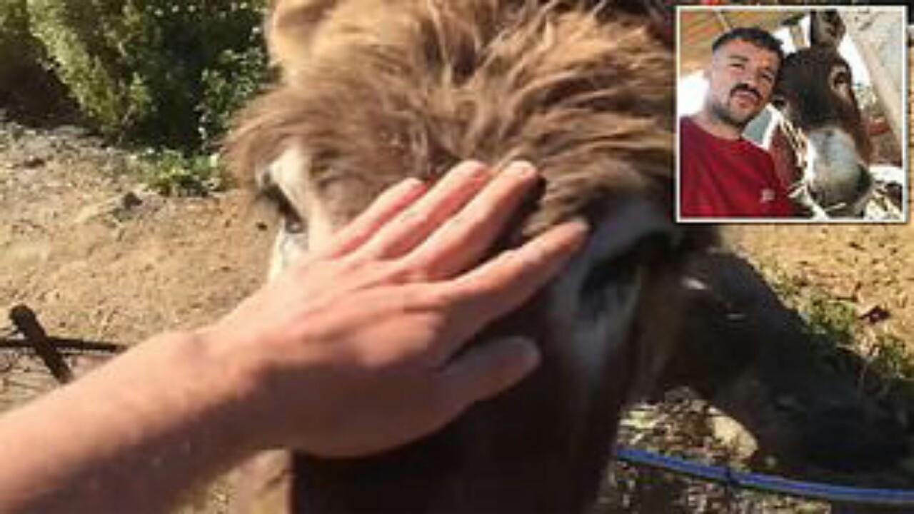 بالفيديو.. بكاء حمار أثناءرؤية مالكه بعد غياب شهرين