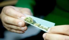 """"""" مكافحة المخدرات """" توضح المواد شديدة الضرر التي يحويها الحشيش"""