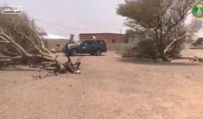 """بالفيديو.. """"البيئة"""" تنقذ أشجار برية سقطت في نجران"""