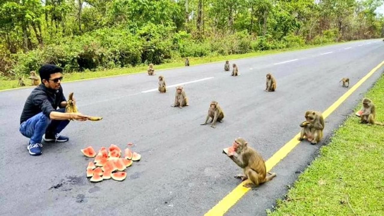 بالصور..القرود تطبق إجراءات التباعد الاجتماعي في الهند