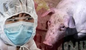 تطورات فيروس إنفلونزا الخنازير الجديد الذي ظهر في الصين
