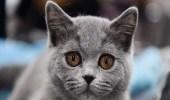 قطة تُنهي حياة سيدة