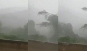 بالفيديو.. عاصفة أمطار غزيرة في جبال فيفاء