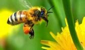 علماء يحذرون من جائحة تهدد حياة النحل والنباتات