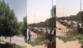 بالفيديو.. عمالة تقص الأشجار وتقوم بتقزيمها على طريق الملك فهد