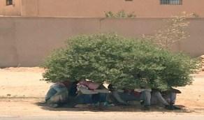 """""""الموارد البشرية"""" تتفاعل مع صورة العمالة التي تستظل تحت شجرة"""