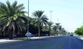 أمانة الرياض تمنع زراعة النخيل بالمجمعات والمولات